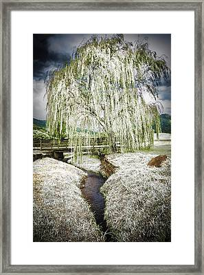Icy Tree In The Meadow Framed Print