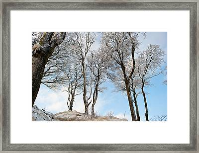 Icy Trees Framed Print