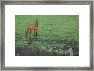 Idaho Farm Horse1 Framed Print by Cynthia Powell