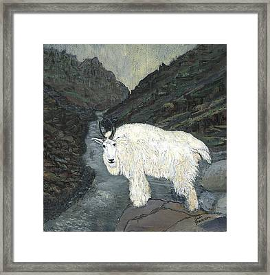 Idaho Mountain Goat Framed Print