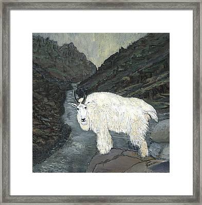 Idaho Mountain Goat Framed Print by Sara Stevenson