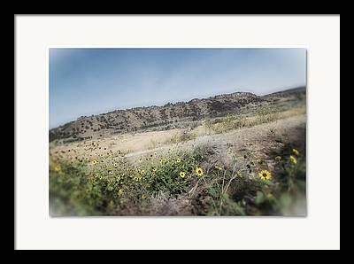 Flowers Along Highway Framed Prints