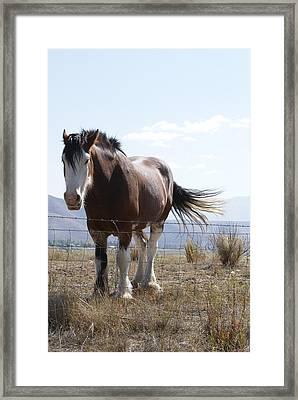 Idaho Work Horse 2 Framed Print by Cynthia Powell