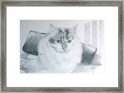 Idget Framed Print by Joette Snyder