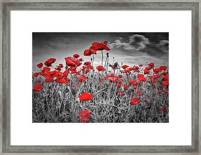 Idyllic Field Of Poppies Colorkey Framed Print
