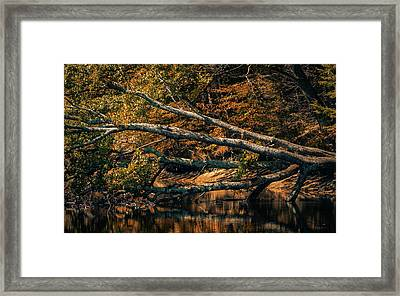 If A Tree Falls Framed Print