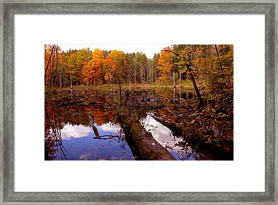 If A Tree Falls Framed Print by Evelyn Patrick