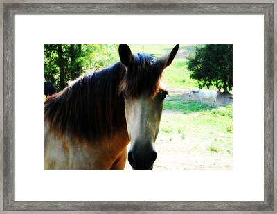 If Horses Could Talk Framed Print by Anita Faye