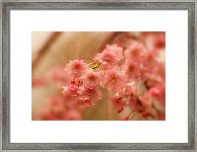 If Only For A Moment Framed Print by Angie Tirado