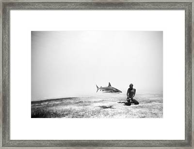 If Sharks Could Fly Framed Print
