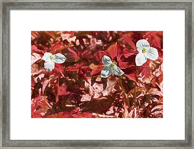 If The Forest Was Red Framed Print