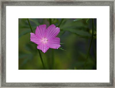 If You Forget Me_series 4 Framed Print