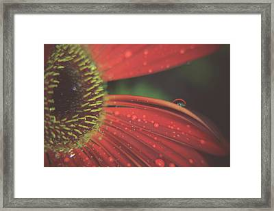 If You Love Someone Framed Print