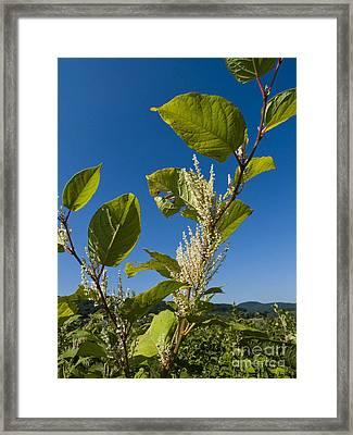 Igniscum For Bio-energy Framed Print