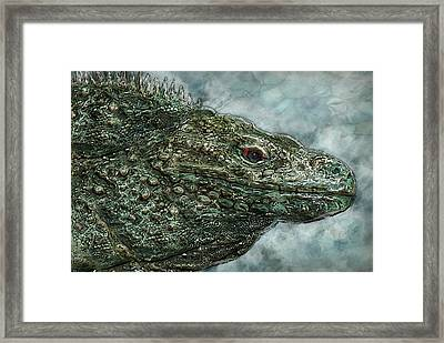 Iguana 2 Framed Print by Jack Zulli