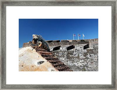 Iguana Basking On The Wall Of The San Cristobal Fort San Juan Puerto Rico. Framed Print by George Oze