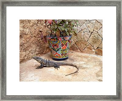 Framed Print featuring the photograph Iguana by Dianne Levy