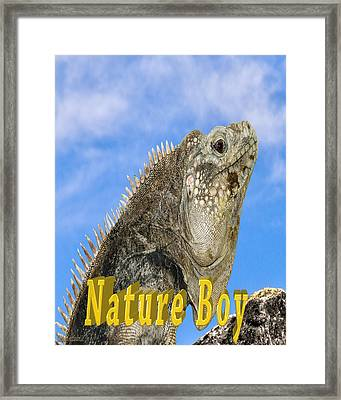 Iguana Nature Boy Framed Print