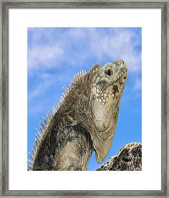 Iguana Nature Wear Framed Print by LeeAnn McLaneGoetz McLaneGoetzStudioLLCcom