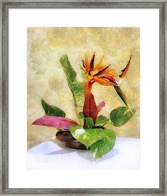 Ikebana Bird Of Paradise Framed Print by Francesa Miller