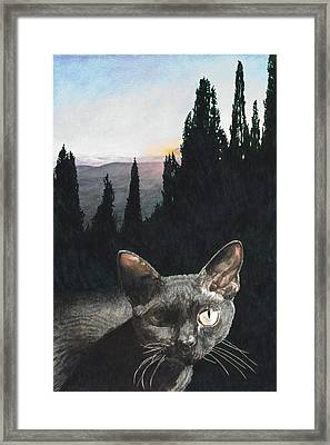 il Magnifico Framed Print by Perry Woodfin