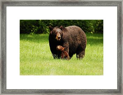 I'll Always Look Up To You Framed Print by Lori Tambakis