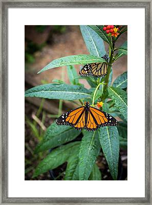 I'll Be There...in A Moment... Framed Print by Deborah Klubertanz