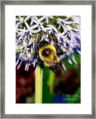 I'll Bee Back Framed Print