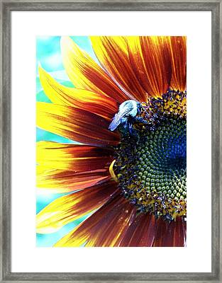 I'll Bee There Framed Print by Vijay Sharon Govender