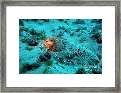 Illuminated Eye Of A Common Cuttlefish Framed Print by Sami Sarkis