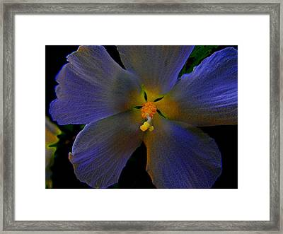 Illuminated Flower Framed Print by Martin Morehead