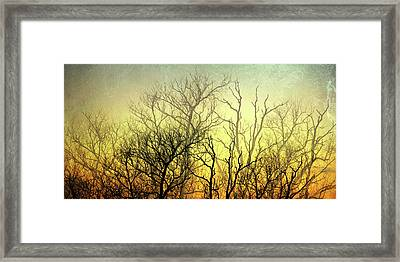Illuminated Forest Framed Print by Sharon Lisa Clarke