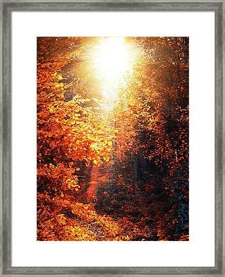 Illuminated Forest Framed Print by Wim Lanclus