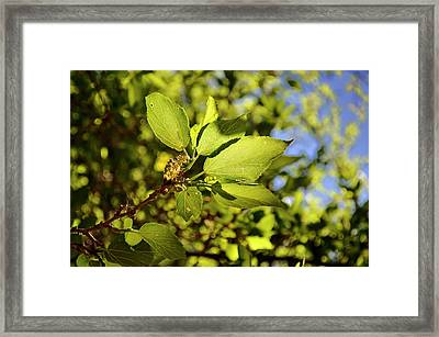 Illuminated Leaves Framed Print