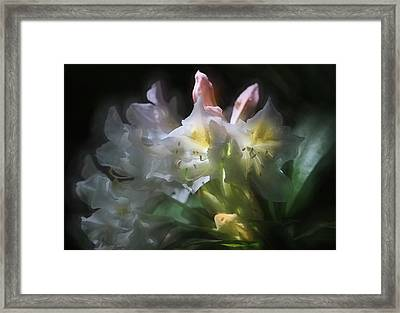 Illuminated Rhododendrons Framed Print