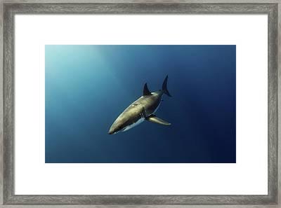 Illuminated Framed Print by Shane Linke