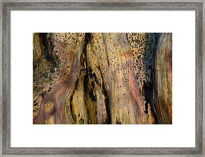 Illuminated Stump 02 Framed Print by Bruce Gourley