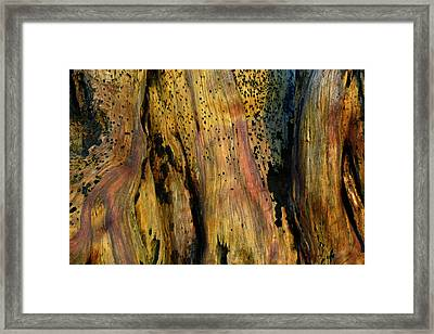 Illuminated Stump Framed Print by Bruce Gourley