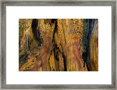 Illuminated Stump With Peeking Crab Framed Print by Bruce Gourley