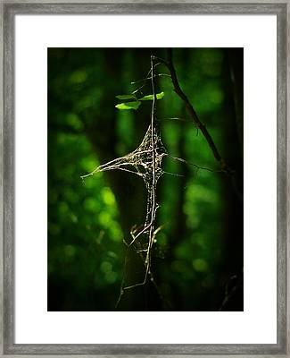 Illumination Framed Print by Rebecca Sherman