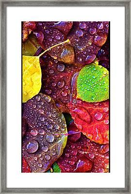 Illuminous Colour Framed Print by Sheila Mcdonald