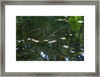 Illusion   Framed Print by Jane Eleanor Nicholas