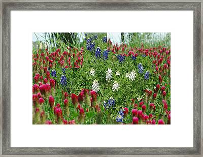 Illusions Of Texas In Red White Blue Framed Print by Robyn Stacey