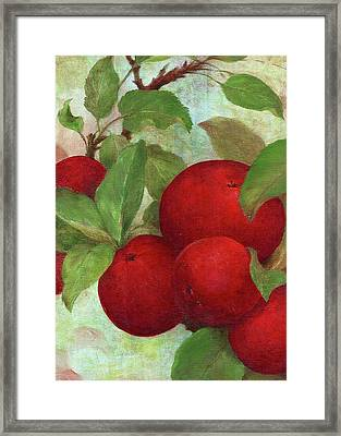 Framed Print featuring the painting Illustrated Apples by Judith Cheng