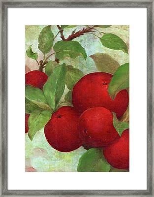 Illustrated Apples Framed Print