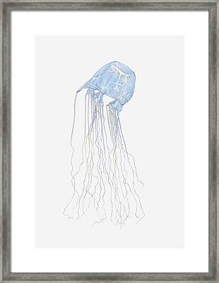 Illustration Of Box Jellyfish (cubozoa) Framed Print