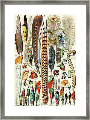 Illustration Of Feathers And Birds  Framed Print