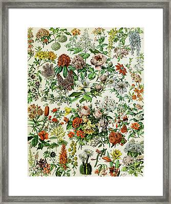 Illustration Of Flowering Plants Framed Print by Adolphe Philippe Millot