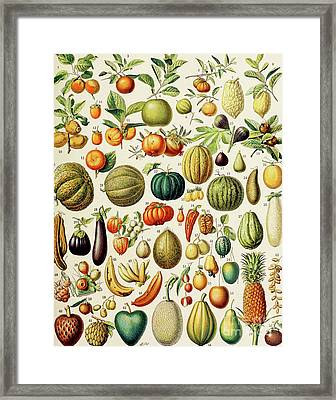 Illustration Of Fruit Framed Print by Adolphe Philippe Millot