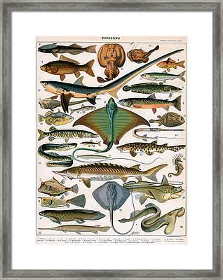 Illustration Of Ocean Fish Framed Print by Alillot